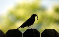Early bird -- telgraph uk