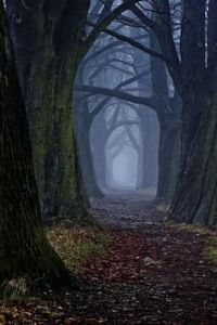 path-through-the-woods